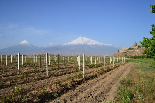 Atemberaubender Blick auf den Ararat