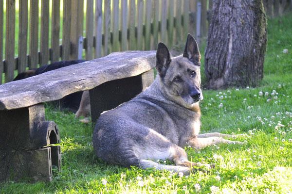 Hofhund - Nalbach