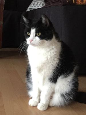 Bammi - EKH Katze (Rehlingen)