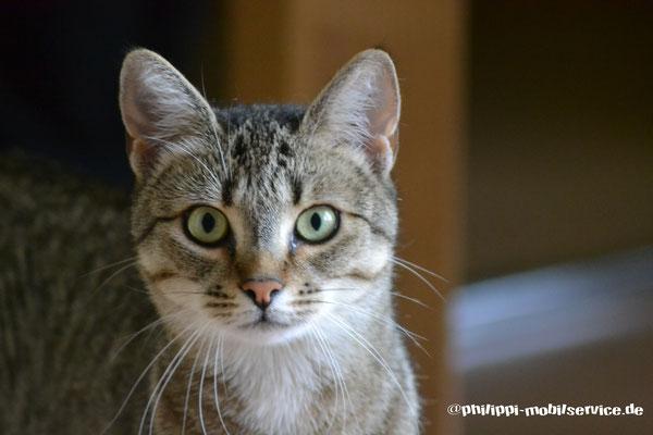 Luna - EKH Katze (Saarlouis)