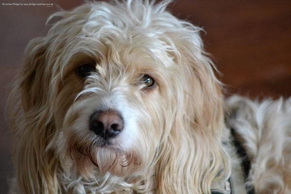 Lara - Wasserhund