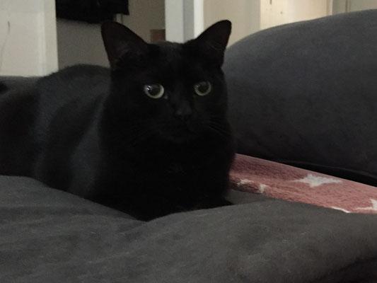 Luna - EKH Katze (Dillingen)
