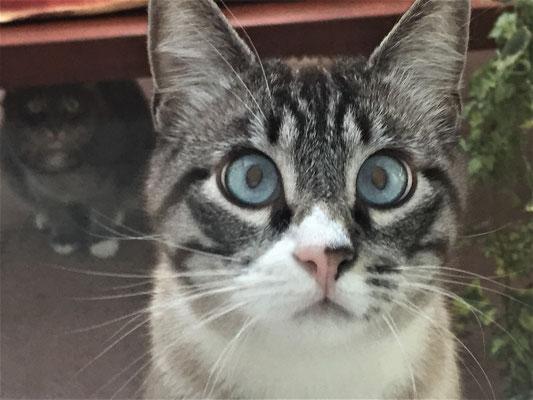 Tierschutzkatzen - Schwalbach