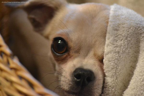 Diaz - Chihuahua