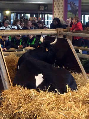 La vache de l'année ! FINE !