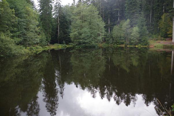 Forêt de milieu humide
