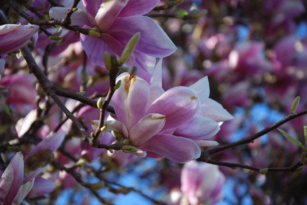 une flore