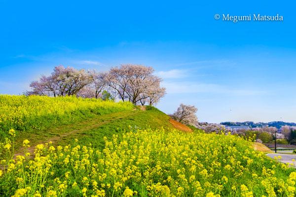 呉羽山公園・都市緑化植物園(富山市)