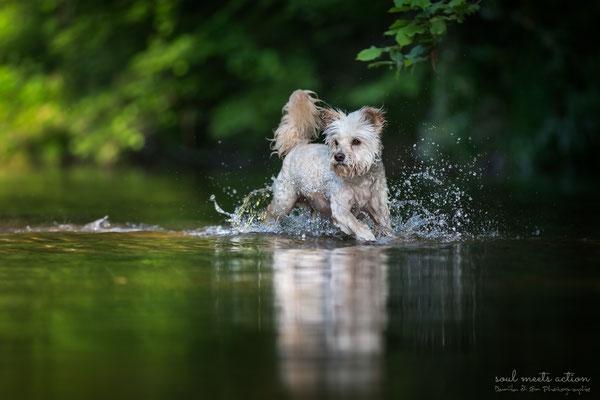 Aebby im Wasser (Terriermischling, 9 Jahre)  - Daniila di Sein Hundefotografie, Actionfotografie