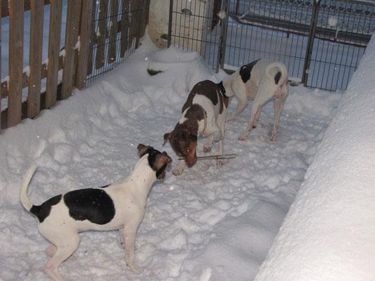 12.03.2013 - Mayla mit Cesar und Cleo im Schnee