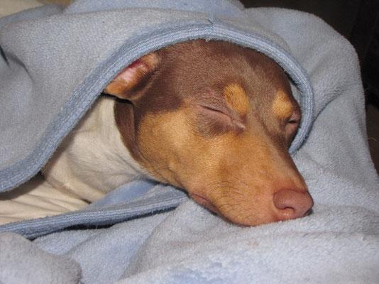 16.02.2014 - Müde nach dem Spaziergang