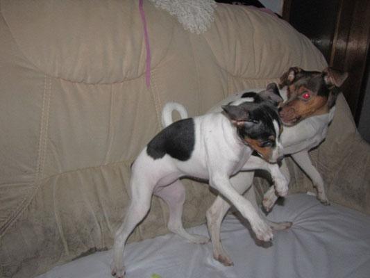 03.02.2013 - Cleo und Mayla verstehen sich brima