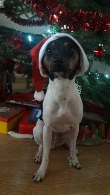 24.12.2017 - Max spiel den Weihnachtsmann ;-)