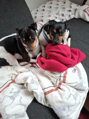 23.12.2020 - Darco (rechts) mit halb Schwester Cleo (links)