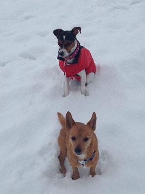 20.01.2016 - Aisha  + Nikki im Schnee