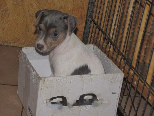 Barcley - Foto nicht gestellt ;-), er ist alleine in den Karton