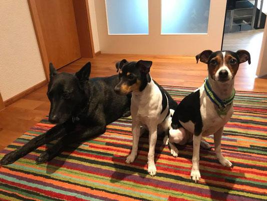 07.01.2018 - Aisha (aus dem A-Wurf) bei Coco (aus dem C-Wurf) zu besuch.....süss!