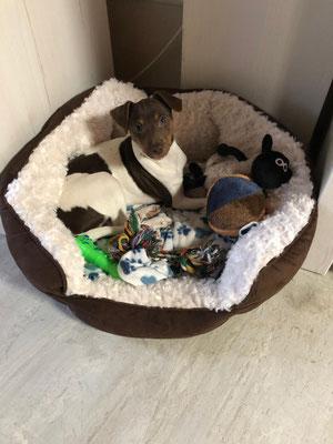 13.01.2019 - Duke bunkert alle seine Spielsachen in seinem Körpchen