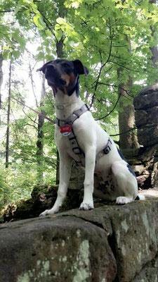 mitte Juni - ein toller Hund geworden