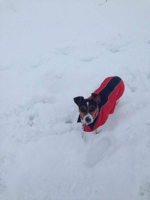 20.01.2016 - Aisha tobt im Schnee