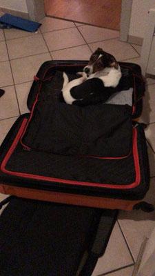 31.01.2018 - Aisha möchte auch mit in den Urlaub  ;-)