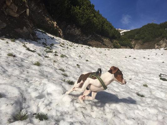 Mai 2015 - Aimy im Schnee, mach doch sichtlich Spaß