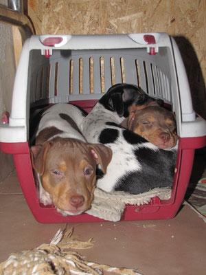 3 in einer viel zu kleinen Transportbox