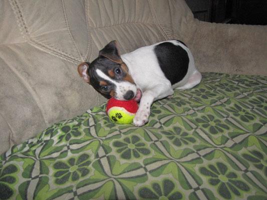 03.02.2013 - Mayla verknügt sich mit ihrem Ball