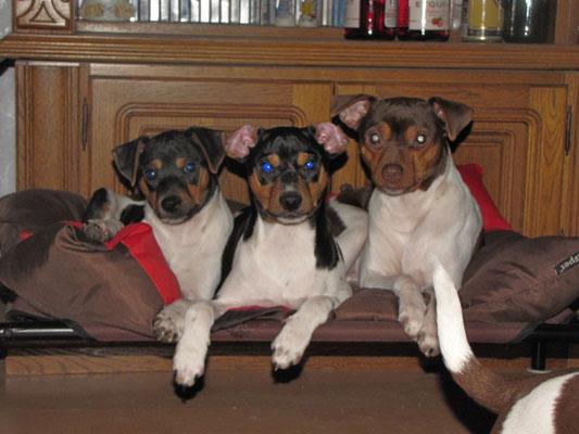 16.01.2019 - von links Darco, Danny und Halbschwester Blanca