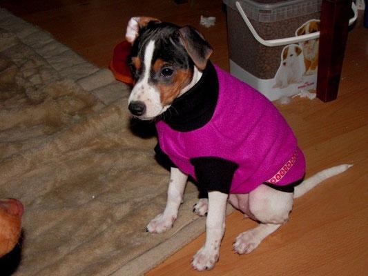 12.02.2013 - Mayla in ihrem Pullover kurz bevor wir nach draußen in die kälte gingen ;-)
