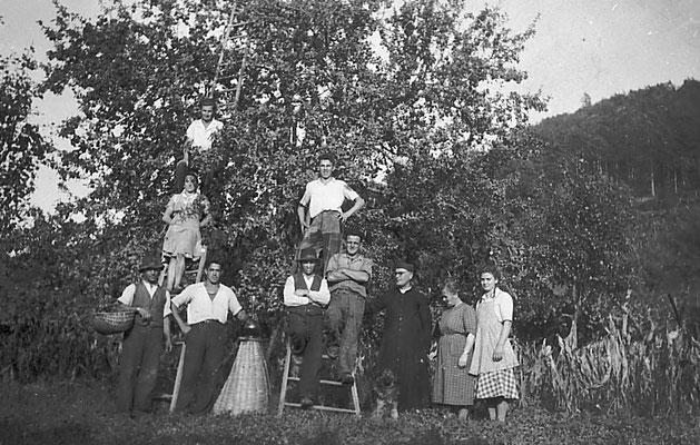 Boliani. Raccolta mele nel campo della chiesa presso la località Boliani, adove attualmente c'è la scuola nuova di Vigo Meano. Da Ivana Saltori.