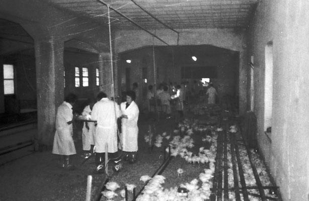 """All'inizio degli anni '70 l'ormai """"ex Macera Tabacchi meano"""" venne trasformata in allevamento di polli dal Sig. Rigotti, che nel frattempo era divenuto unico proprietario,Anni '70. Da Armida Santuari."""