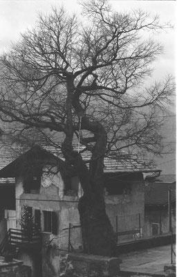 Casa Negri di Rita da Cortesano con albero davanti alla chiesa di Cortesano,