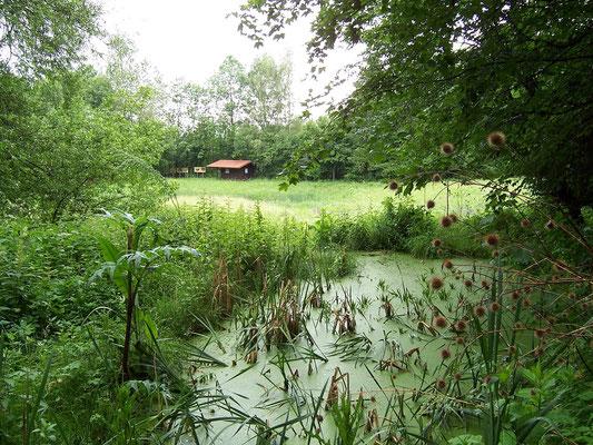 Lachen-Goßmannshofen (Biotop)