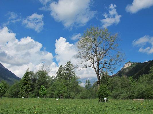 Vils/Tirol (Keltischer Baumkreis mit Labyrinth)