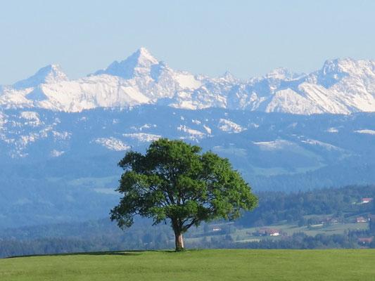 Bad Grönenbach-Kornhofen (Baum)