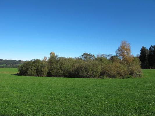 Altusried-Streifen (Toteisloch)