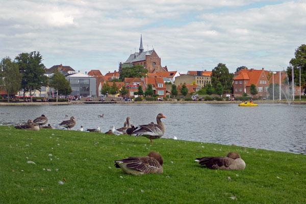 Gänse und Enten belagern das Ufer.