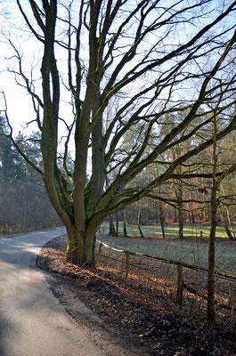 Imposante Bäume am Wegesrand.