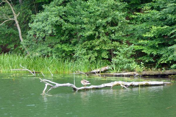 Im Zootzensee baden wir dann noch.