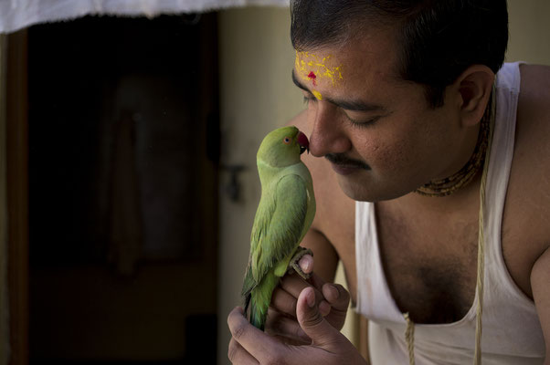 Uomo e il suo pappagallo _ Mathura _ India 2016