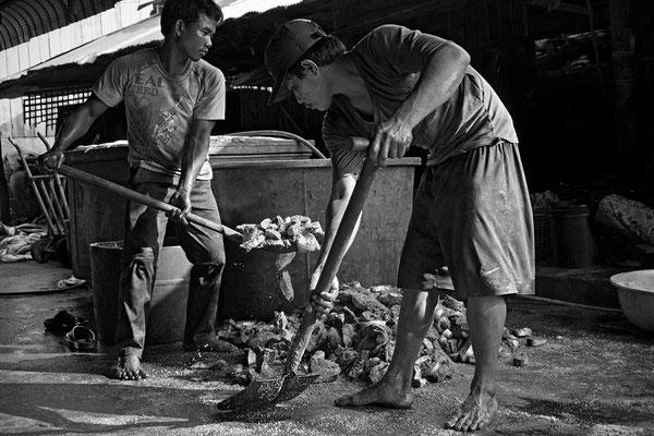 Fabbrica di Fishroll_Cambogia 2015