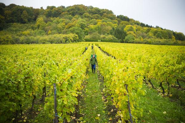 Les vignes des côtes de Meuse