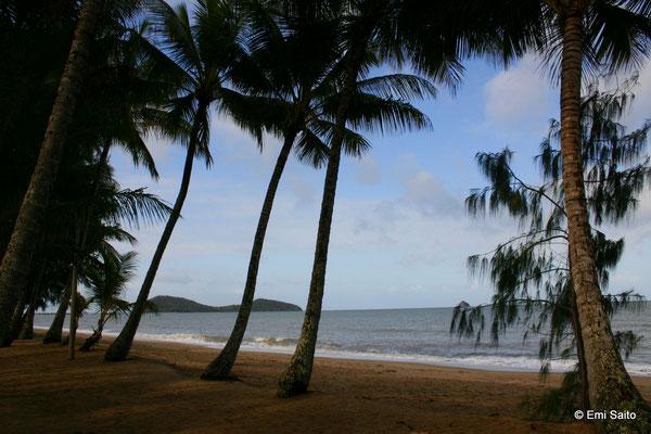 パームコーブのビーチ