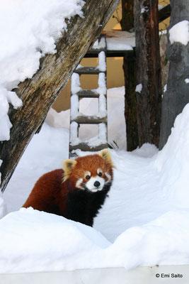 *旭山動物園
