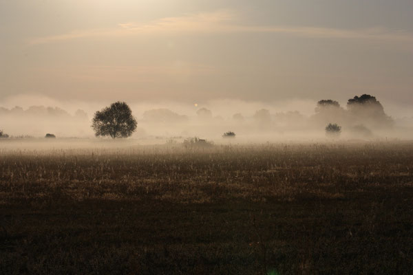 Morgennebel kann auch schön sein