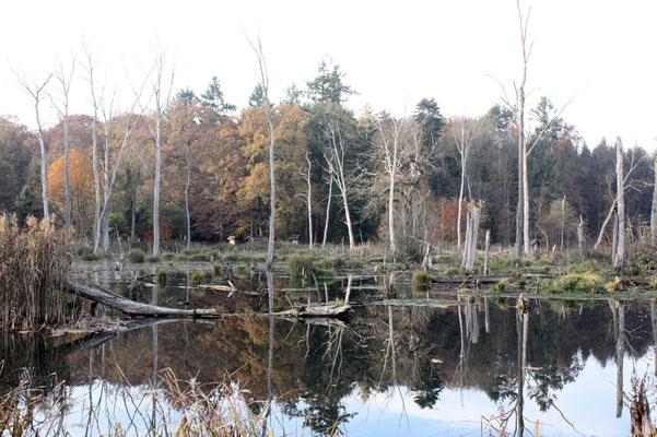 Sumpfgebiet im Elbvorland