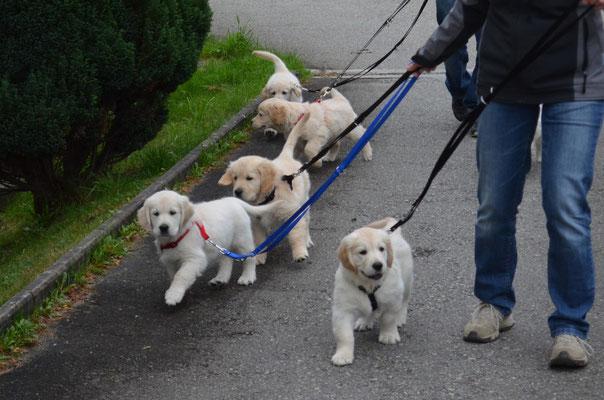 erster Spaziergang