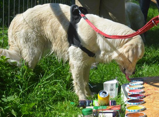 Welche Flüssigkeiten nimmt mein Hund? Bei Acey schnell beantwortet: Alle!