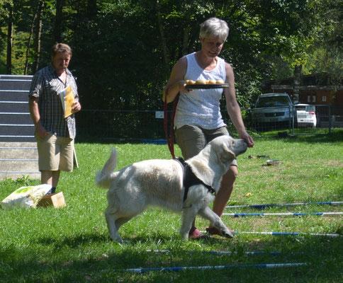 Kartoffeln mit dem Tennisschläger transportieren ist gar nicht so einfach, zum Glück haben unsere Hunde gelernt wie man an der Leine läuft